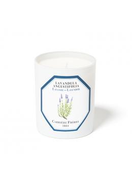Nến Thơm Hương Oải Hương Candle Lavender 185gr