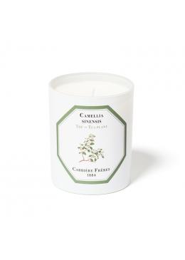 Nến Thơm Hương Trà Đen Candle Tea Plant 185gr