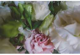 A Bouquet of Flowers: Bó Hoa Mùa Xuân Dịu Dàng
